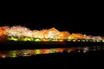 17峰温泉夜桜.jpgのサムネイル画像