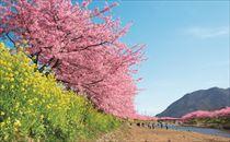 2014河津桜チラシ画像2_R.jpg